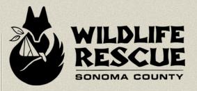 wildliferescuesonomaco
