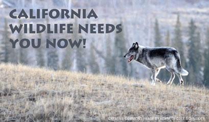 CALIFORNIA-WILDLIFE-NEEDS-YOU-NOW-SALSA