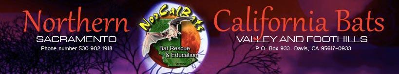 Nor-Cal-Bats