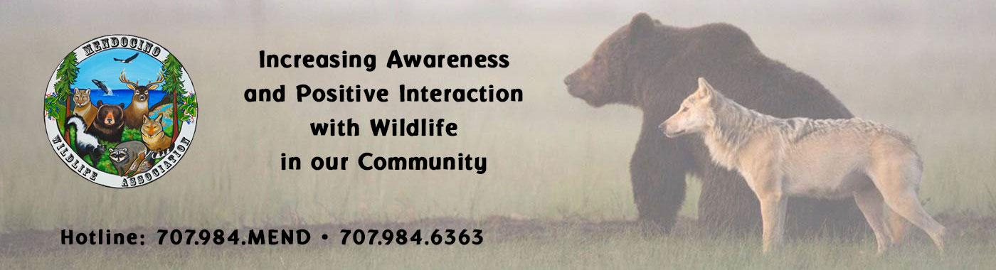 Mendoicno Wildlife Bears