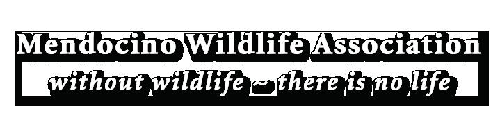 Mendocino Wildlife